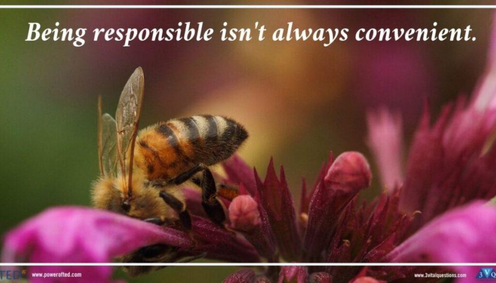 bee on flower: Being responsible isn't always convenient